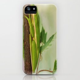 Painted Green Tree Frog iPhone Case