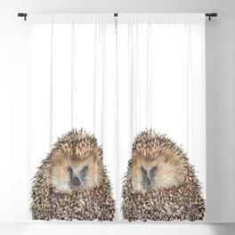 Hedgehog Blackout Curtain