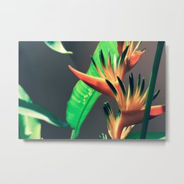 Costa Rican Beauty Metal Print