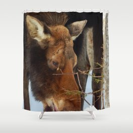 Moose Eating Snow Shower Curtain