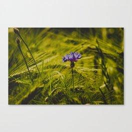 purple on green Canvas Print