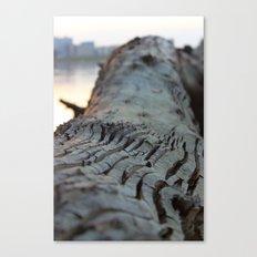 albero sapiente Canvas Print