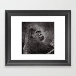 Gorilla. Silverback. BN Framed Art Print