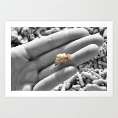 I caught myself a baby hermit crab... Art Print