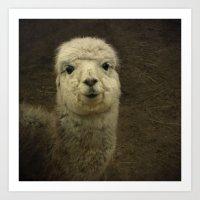 alpaca Art Prints featuring Alpaca  by Guna Andersone & Mario Raats - G&M Studi