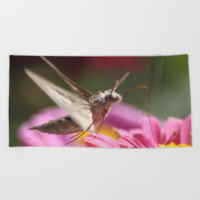 Colorful Moth on a Zinnia Flower Beach Towel
