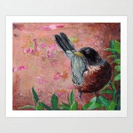 American Robin #1 Art Print