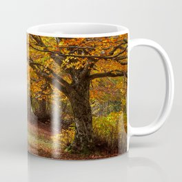 Colorful autumn in the forest of Canfaito park, Italy Coffee Mug