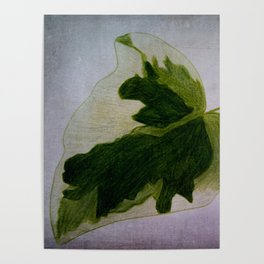 leaf drawing Poster