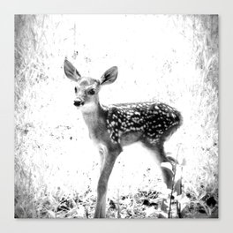 The Sweetest fawn Black & White Canvas Print