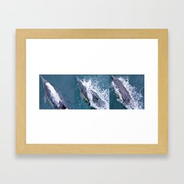 Dolphin collage Framed Art Print