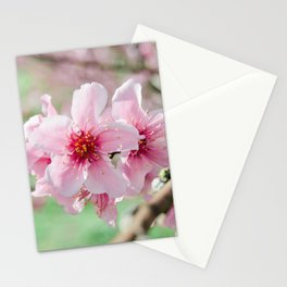 Peach Blossoms 15 Stationery Cards