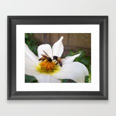 Bees at Work Framed Art Print