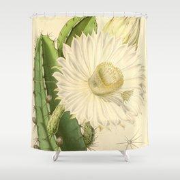 Strophocactus testudo Shower Curtain