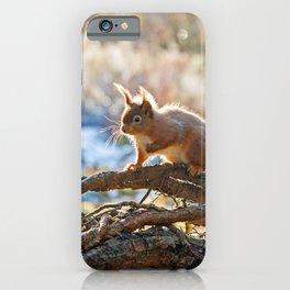 Squirrel on branch iPhone Case