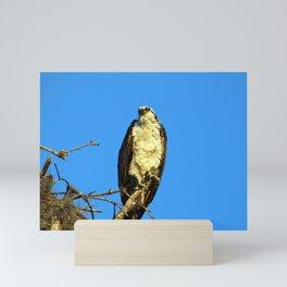 An Osprey in a Tree Mini Art Print