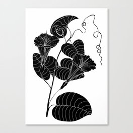Bush Potato (Also known as Desert Yam) - Ipomoea costata Canvas Print