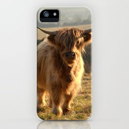 Young Highland Cow iPhone Case
