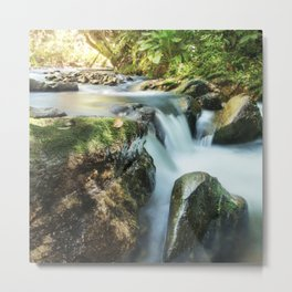 River, Biodiversity Atlantic Forest Metal Print