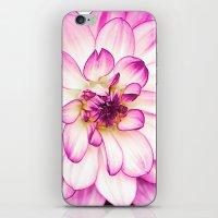 dahlia iPhone & iPod Skins featuring dahlia by Karl-Heinz Lüpke