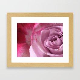 Pink Surrexerunt Framed Art Print