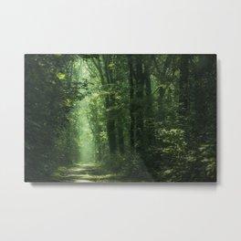 Another Sunlit Woodland Metal Print