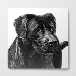 Loving labrador Metal Print