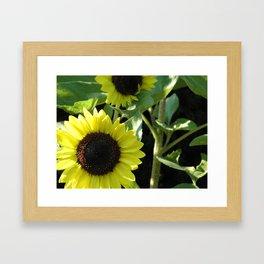 Growing Sunshine Framed Art Print