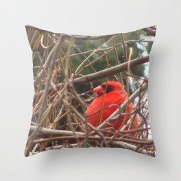 Chilly Cardinal 2 Throw Pillow