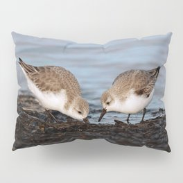 A Pair of Sanderlings Shares: A Meal is Better When Eaten Together Pillow Sham