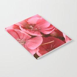 Sweet William Notebook