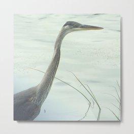 bird stare Metal Print