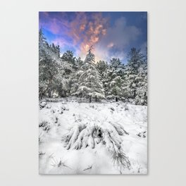 """""""Mountain Light IV"""" Snowy Forest At Sunset Canvas Print"""
