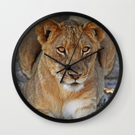 Young lion - Africa wildlife Wall Clock