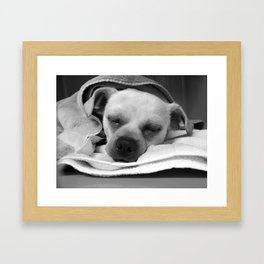 Peacefully Sleeping Dog Framed Art Print