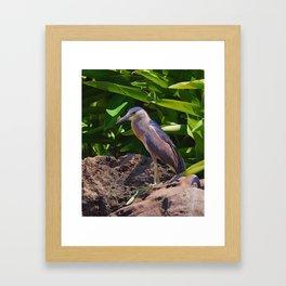 Perched Herron on a Rock Framed Art Print