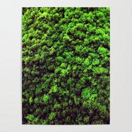 Dark Green Moss Poster