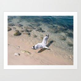 Gold Coast Seagull Art Print