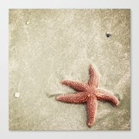 starfish Canvas Prints featuring Starfish by Kaelyn Ryan Photography