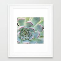 succulent Framed Art Prints featuring Succulent by Tammy Franck
