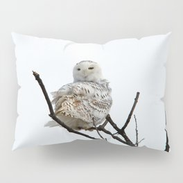 Twist and Shout (Snowy Owl) Pillow Sham