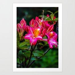Pink flowers/ Art Print