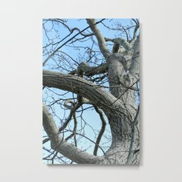 Winter Tree in Beverly, MA Metal Print