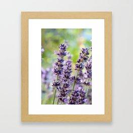 Lavender Flowers #1 #floral #art #society6 Framed Art Print