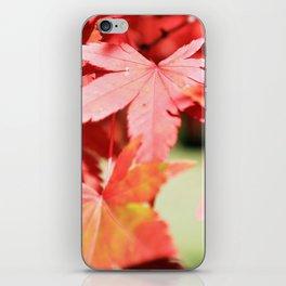 Japanese Maple Leaves 2 iPhone Skin