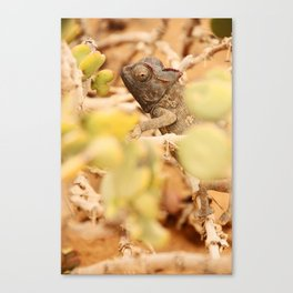 NAMIBIA ... the  chameleon Canvas Print