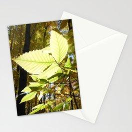 Fagus grandifolia Stationery Cards
