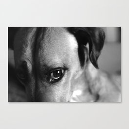 Guilty As Charged Canvas Print