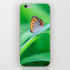 Butterfly on Grass iPhone & iPod Skin
