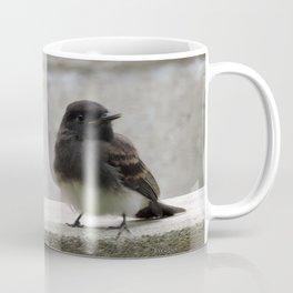 Young Black Phoebes Coffee Mug